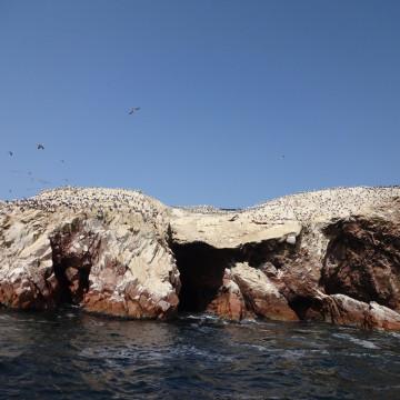 Тысячи птиц на островах