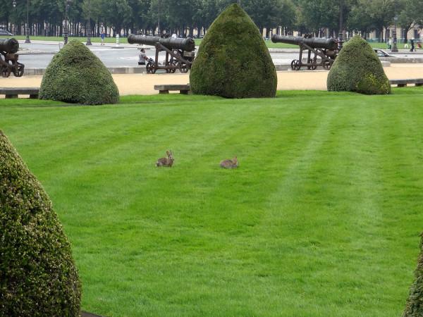 Кролик альфа-самец