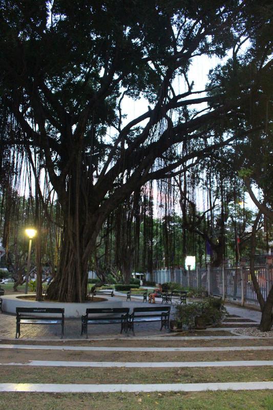 Дерево с лианами около библиотеки