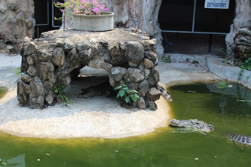 Ват Чакрават и кракодилы