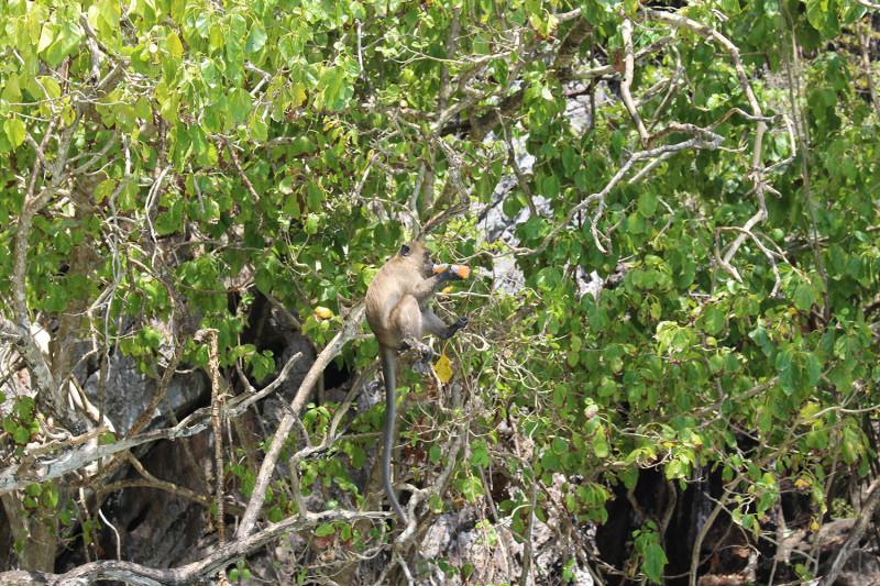 Monkey Beach о. Пхи-Пхи