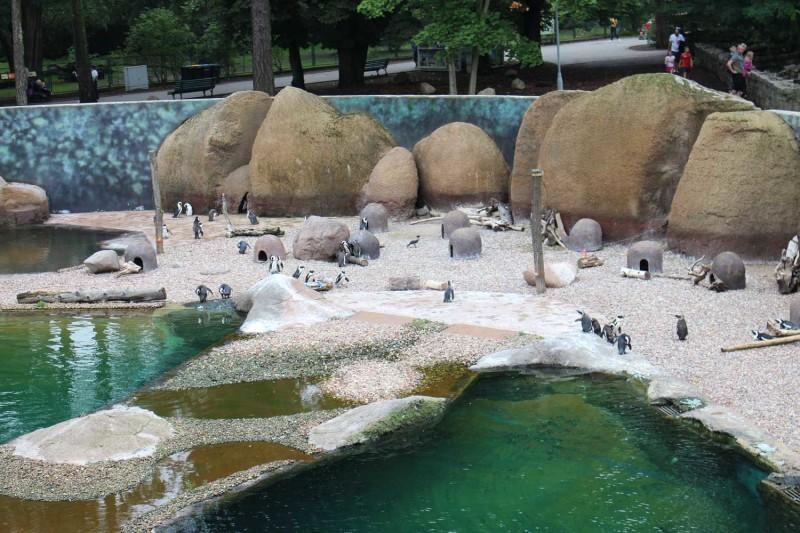 Пингвины Африкариум