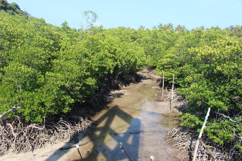 Речка с мангровыми деревьями