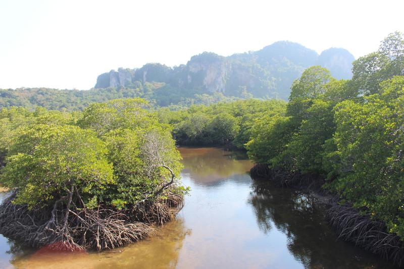 Мангровые заросли и горы