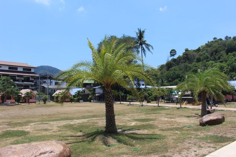 Самые настоящие пальмы