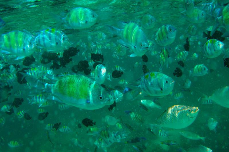 Количество рыбок))