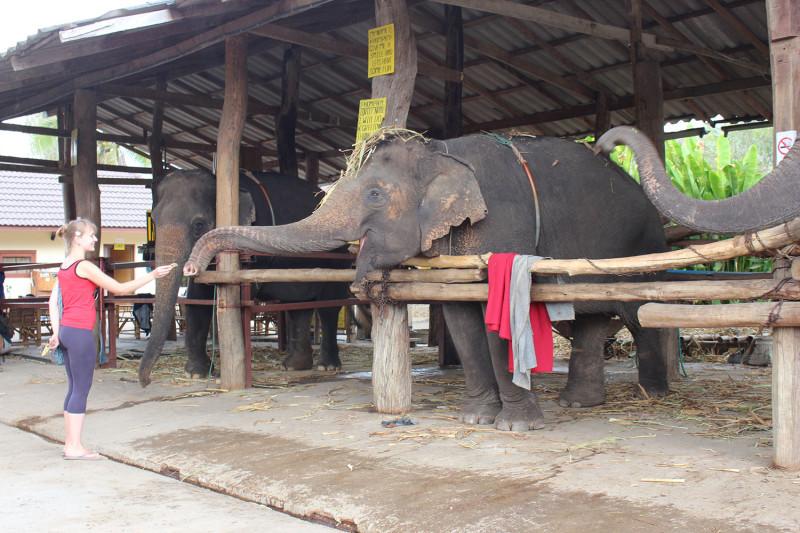 Слоны оказались очень разговорчивыми