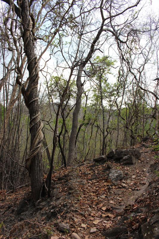 Жуткие деревья