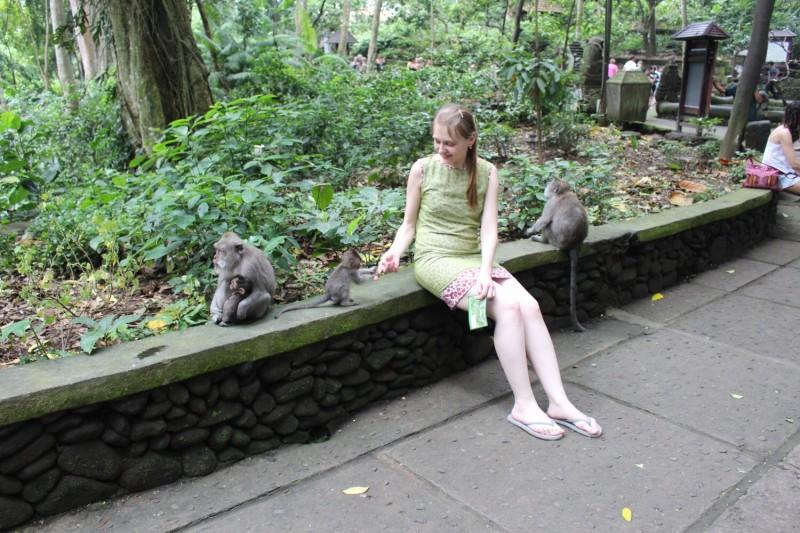 Любопытная маленькая обезьянка