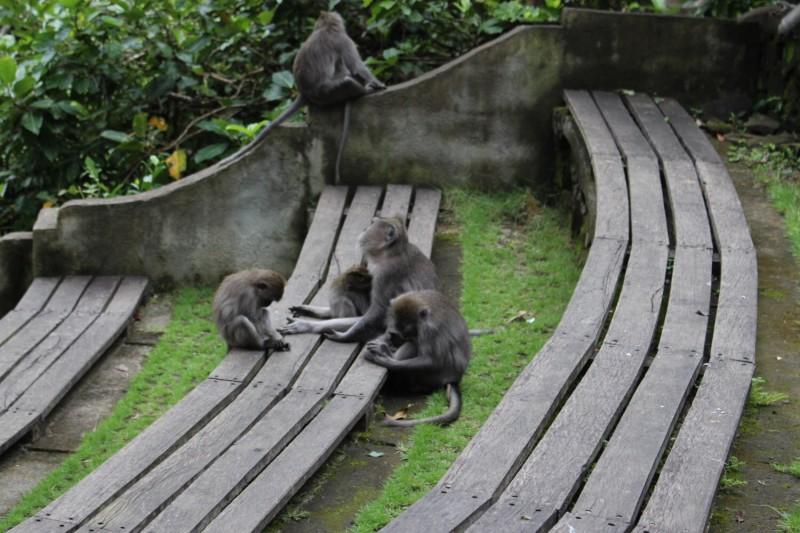 Макаки отдыхают от туристов