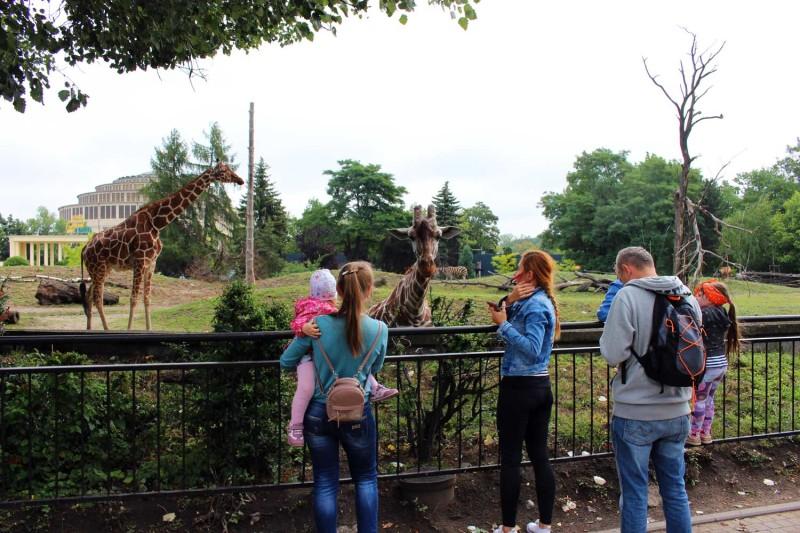 Жирафы-страусы-зебры